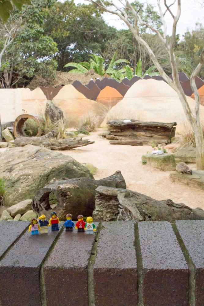 Mini-Gs love the meerkats too