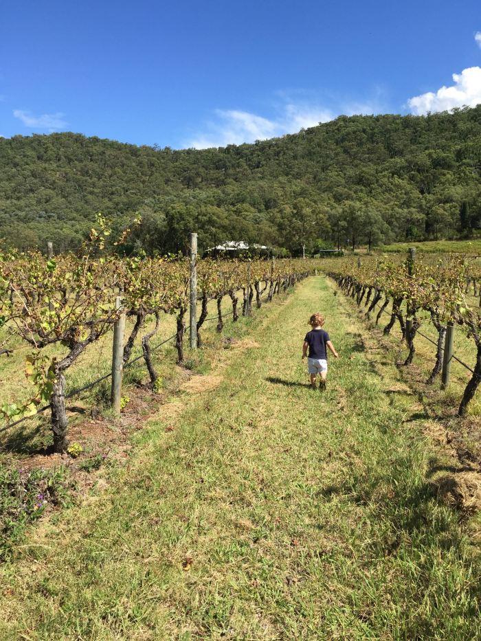Walking the vines